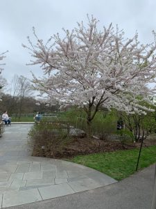 New York Botanical Garden (NYBC)