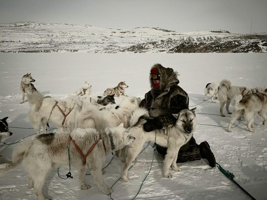 Tocht met sledehonden bij de Eskimo's